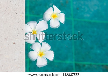 flower floating in pool. In the Hotel at thailand