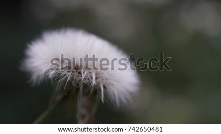 flower, flower background, outdoor, street, seasons, seasons weather, seasons background #742650481