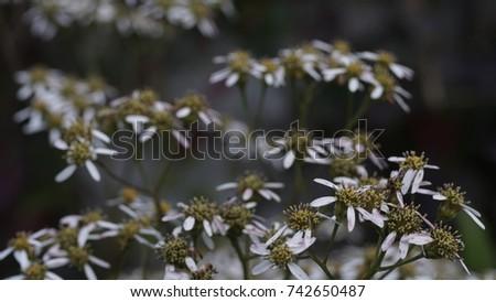 flower, flower background, outdoor, street, seasons, seasons weather, seasons background #742650487