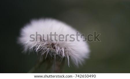 flower, flower background, outdoor, street, seasons, seasons weather, seasons background #742650490