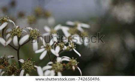 flower, flower background, outdoor, street, seasons, seasons weather, seasons background  #742650496