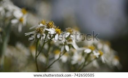 flower, flower background, outdoor, street, seasons, seasons weather, seasons background #742650505