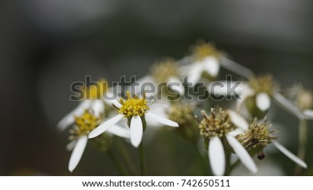 flower, flower background, outdoor, street, seasons, seasons weather, seasons background  #742650511