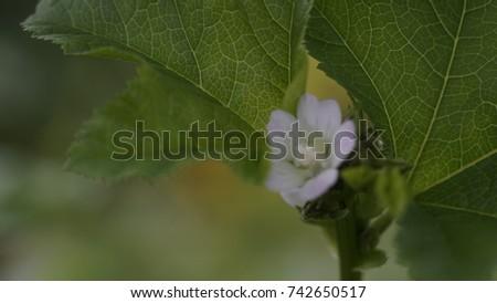 flower, flower background, outdoor, street, seasons, seasons weather, seasons background  #742650517