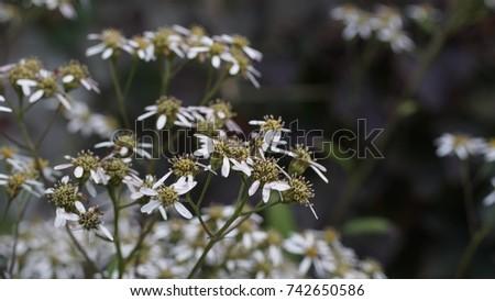 flower, flower background, outdoor, street, seasons, seasons weather, seasons background #742650586