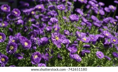 flower, flower background, outdoor, street, seasons, seasons weather, seasons background #742651180