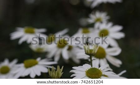 flower, flower background, outdoor, street, seasons, seasons weather, seasons background  #742651204