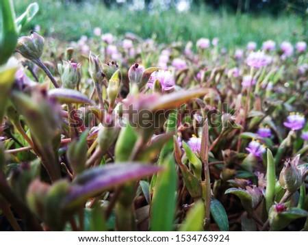 Flower flower flower Beautiful flower #1534763924