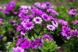 flower flowering plant