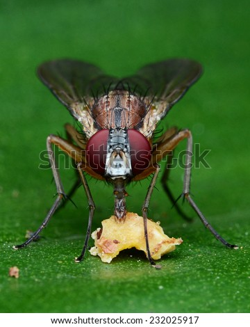 Flower Fly Eating Food