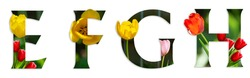Flower font Alphabet e, f, g, h made of Real alive flowers with Precious paper cut shape of letter. Collection of brilliant flora font for your unique decoration in spring, summer  many concept idea