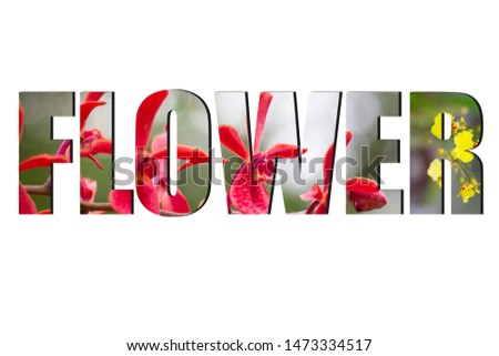 Flower font Alphabet made of picture flower on white background