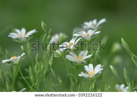 Flower for postcard background