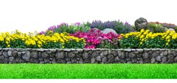 Flower garden and stone fence on white background