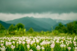 Flower garden with mountain