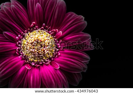 Flower, gerbera, close-up, macro. #434976043