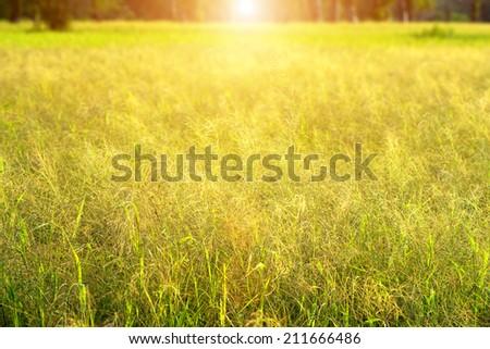 Flower grass and sun light. #211666486