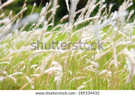 flower grass at relax morning time  #189104432