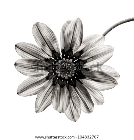 flower in black and white on white background.