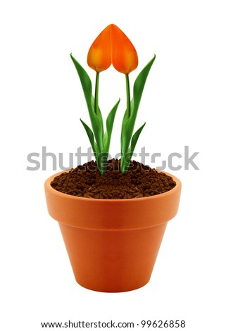 flower in clay pot isolated on white background.