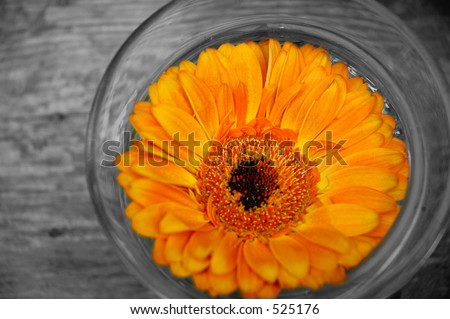 Flower in Glass