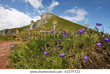 Flower in high mountains - High Tatra, Slovakia