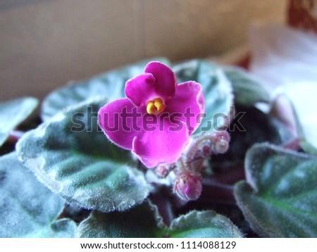 Flower in pot #1114088129