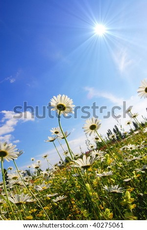 flower in summer under blue sky with copyspace