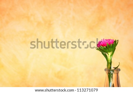 Flower in vase near yellow wall - stock photo