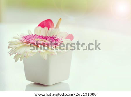 Flower in vase, White Gerbera in white vase, Placed on a white table  at the window, soft focus and blurred background