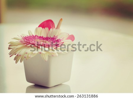 Flower in vase, White Gerbera in white vase, Placed on a white table  at the window, soft focus and blurred background, vintage tone