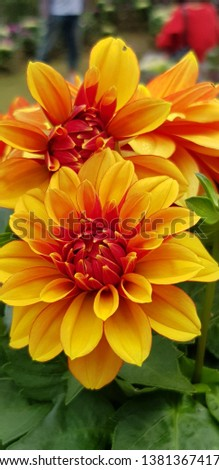 Flower is a sunshine.The color of flowers is bright and bright. #1381367417