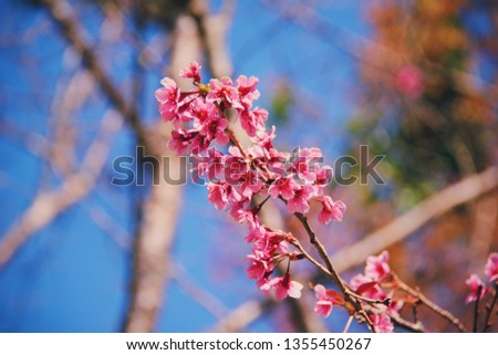 Stock Photo Flower is beauiful.
