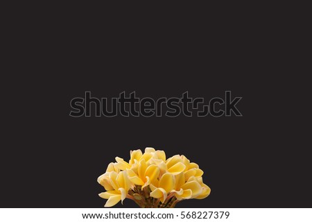 Flower isolate #568227379