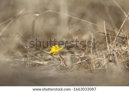 Flower just chillen in some grass Stockfoto ©