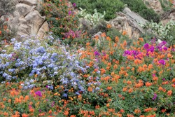 Flower landscape. Beautiful rocky slope overgrown with huge amount of colorful blue orange pink flowers and cacti near the beach in Lloret de Mar, Spain. Image with selective focus on foreground.