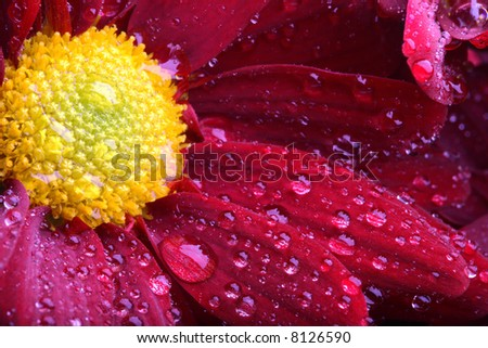 flower macro with water drops