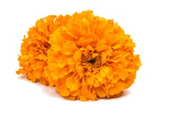 Flower marigold isolated on white background