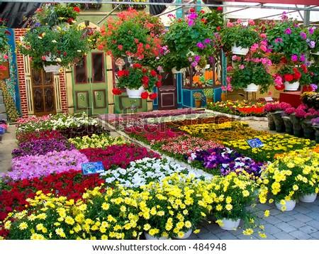 Flower market, Montreal
