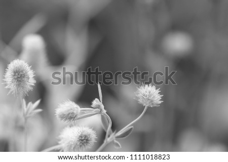 Free photos black and white meadow flowers grass in nature flower meadow blossom black white nostalgia romantic 1111018823 mightylinksfo