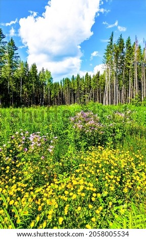 Flower meadow on the edge of the forest. Forest meadow flowers view. Meadow flowers in forest