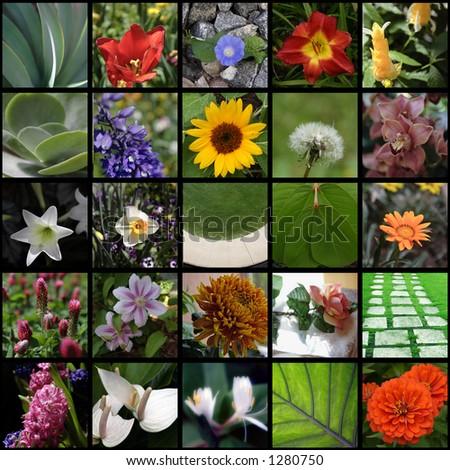 Flower Montage