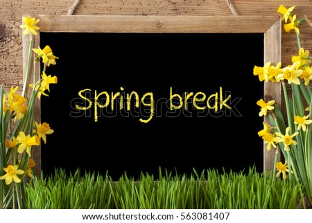 Flower Narcissus, Chalkboard, Text Spring Break #563081407