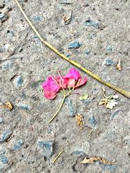 flower nature stone texture pinkflower