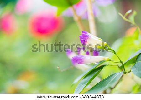 Flower nature with copy space using as background or wallpaper. #360344378