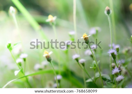 Flower nature with copy space using as natural background or wallpaper concept. #768658099