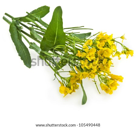 Flower of a rapeseed, Rape blossoms , Brassica napus, isolated  on white background