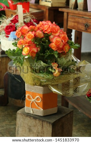 Flower of begônia planted, vase decorate to gift and decorate the environment #1451833970