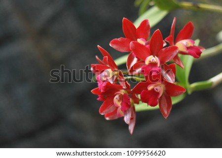 free photos orchid cattleya flowers avopix com