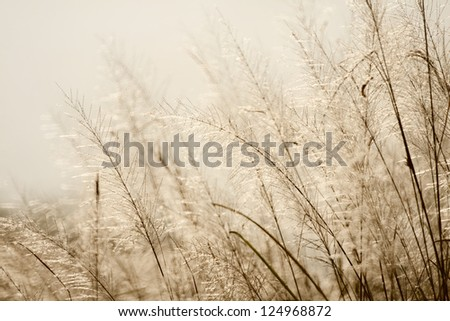 flower of grass in the morning